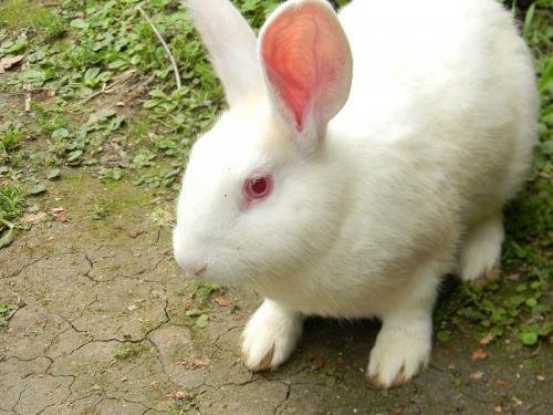 Comunicándonos con nuestro conejo