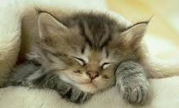 conjuntivitis-en-gatos-recien-nacidos_a8cwi