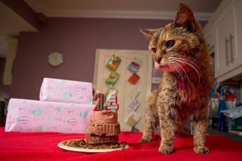 Conoce a Poppy, el gato más viejo del mundo