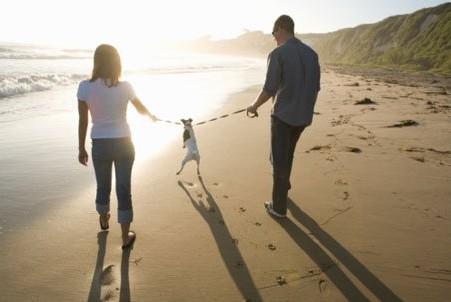 Consejos en beneficio de la mascota en caso de divorcio