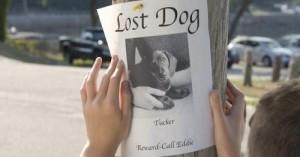 consejos-para-buscar-a-un-perro-perdido_vju0c