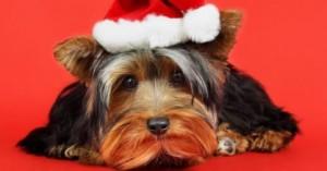 consejos-para-celebrar-navidad-y-ano-nuevo-con-la-mascota_d14w5