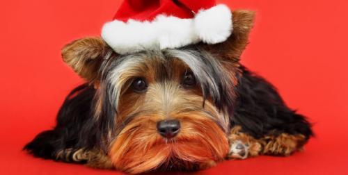 Consejos para celebrar Navidad y Año Nuevo con la mascota
