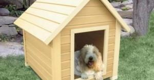 consejos-para-comprar-las-casetas-de-perros_61aeg