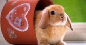 consejos-para-criar-un-conejo-como-mascota_how1f