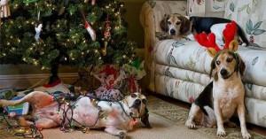consejos-para-cuando-llega-navidad_vbze8