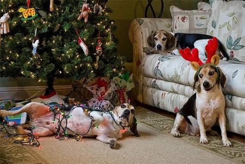 Consejos para cuando llega Navidad