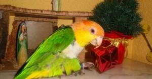 consejos-para-cuidar-a-las-aves-durante-la-navidad_al9ed