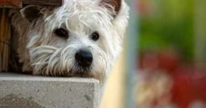consejos-para-desparasitar-al-perro-y-gato_fre18