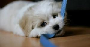 consejos-para-educar-mejor-al-cachorro_csomb