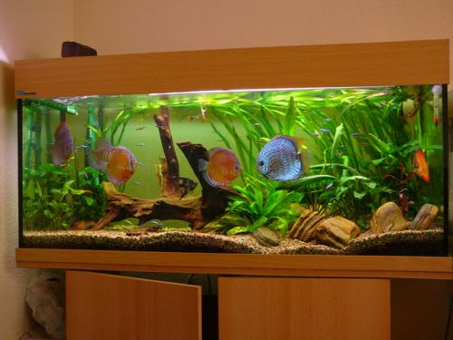 Consejos para el cuidado de las plantas del acuario