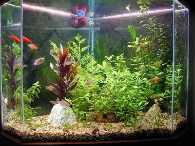 Consejos para el primer acuario canal mascotas for Oxigeno de peceras