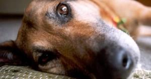 consejos-para-evitar-el-cancer-de-piel-en-las-mascotas_t2o0d