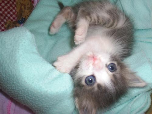 Consejos para la crianza de un gato bebé - CanalMascotas.