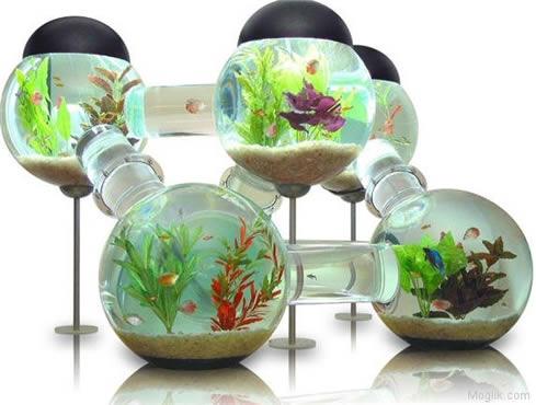 Peces archivos p gina 3 de 6 canal mascotas for Todo para acuarios