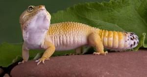 consejos-para-la-salud-de-los-reptiles-como-mascotas_rc8lg