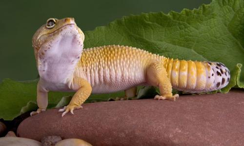 Consejos para la salud de los reptiles como mascotas