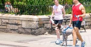 consejos-para-los-paseos-y-ejercicios-fisicos-con-la-mascota_zufn5