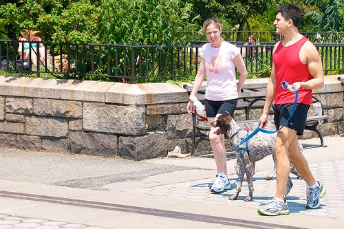 Consejos para los paseos y ejercicios físicos con la mascota