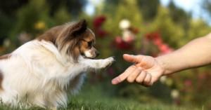 consejos-para-mejorar-la-vida-de-las-mascotas_9uqc6