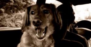 consejos-para-que-el-cachorro-ame-viajar-en-coche_f2c0o