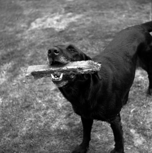 Consejos para que el perro aprenda a traer objetos