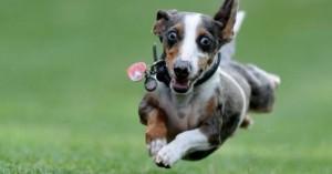 consejos-para-que-el-perro-gaste-las-energias-que-se-acumulan_ynjlo