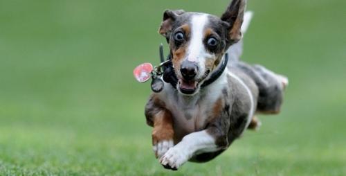 Consejos para que el perro gaste las energías que se acumulan