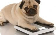 consejos-para-que-el-perro-obeso-adelgace_4zjda