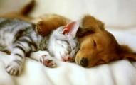 consejos-para-que-el-perro-y-gato-convivan-sin-pelear_7f19i
