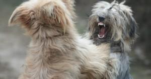 consejos-para-solucionar-una-pelea-violenta-de-perros_np31d