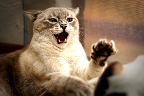 Consejos para tratar con gatos agresivos