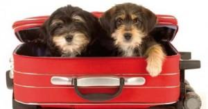 consejos-para-viajar-con-tu-mascota_zglxs
