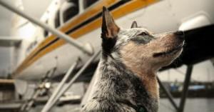 consejos-para-viajar-en-avion-con-la-mascota_icbex