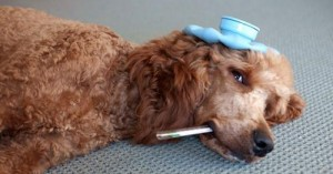 consejos-practicos-para-curar-heridas-a-tu-mascota_kt0b8