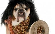 consejos-sobre-disfrazar-a-la-mascota-en-halloween_7iywc