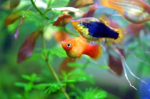 Consejos sobre el hábitat y acuario de los peces