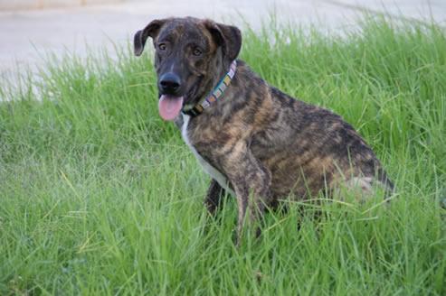 Consejos sobre el raquitismo en los perros
