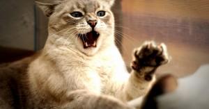 consejos-sobre-la-agresividad-en-los-gatos_kndzt