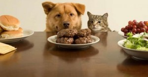 consejos-sobre-la-alimentacion-del-mejor-amigo-del-hombre_qsj17