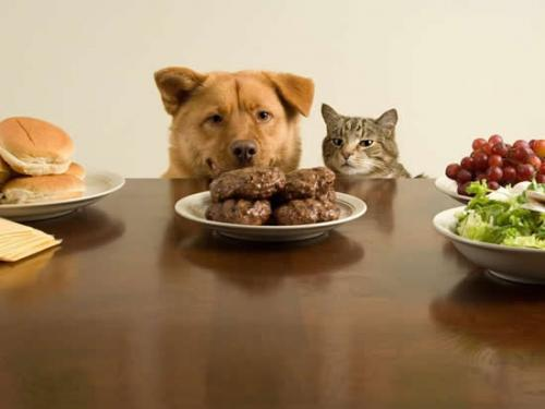 Consejos sobre la alimentación del mejor amigo del hombre