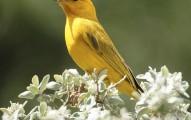 consejos-sobre-la-jaula-de-los-canarios-y-otras-aves_58tpj