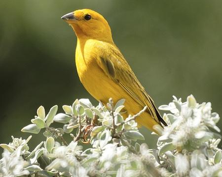 Consejos sobre la jaula de los canarios y otras aves