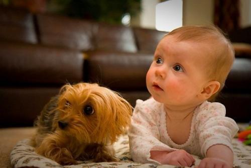 Consejos sobre la mascota y el bebé