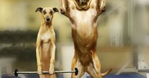 consejos-sobre-los-alimentos-y-el-perro-deportista_npowq