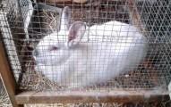 construyendo-una-jaula-para-los-conejos_ly5zn