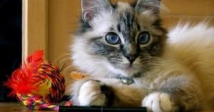 convierte-tu-casa-en-una-zona-de-juegos-para-los-instintos-del-gato_bfei2