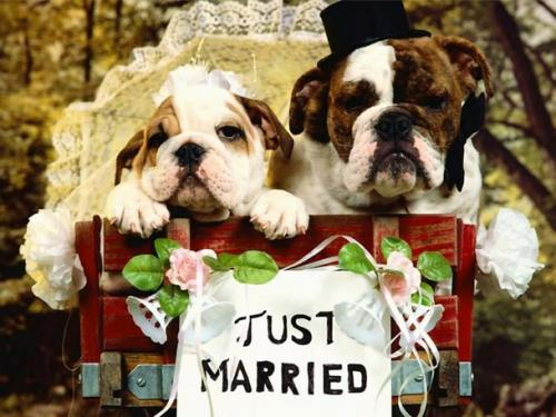 Homosexualismo y temas relacionados - Página 3 Convivencia-de-las-mascotas-de-los-recien-casados_vexiw