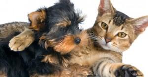 convivencia-de-varias-mascotas-bajo-el-mismo-techo_h7cbk