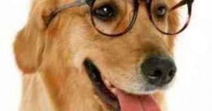 conviviendo-con-un-perro-ciego_c0uns